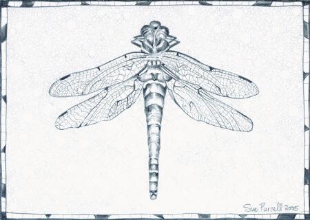 Glandernol Dragonfly, a drawing by artist Sue Purcell