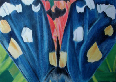 Essence of Iridescense, an abstarct drawing or a Scarlet Tiger moth by artist Sue Purcell