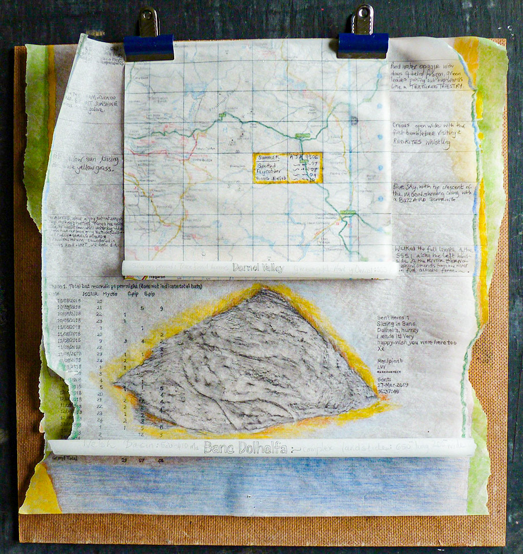 Mapping and Musing - Birds - Bats - Burrows by artist Sue Purcell