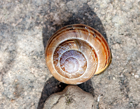 link to Slugs & Snails