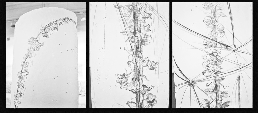 details of pencil drawing 'SEEDS : that's the order of things'