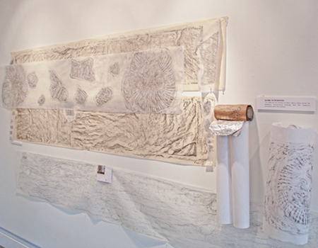 drawings of fossils by artist Sue Purcell