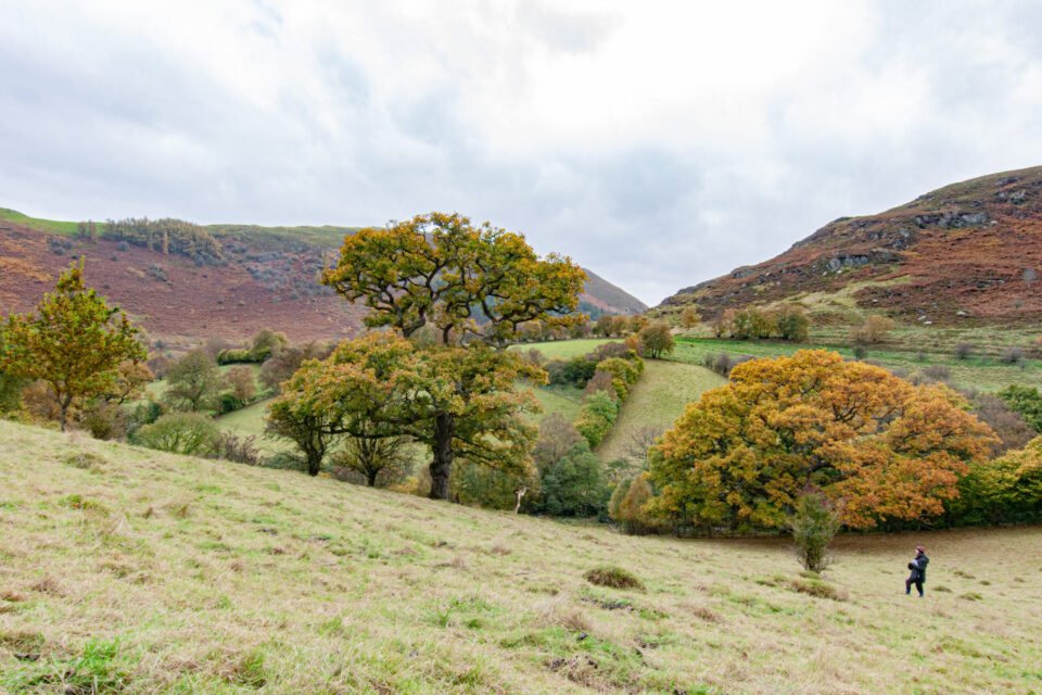 view of Gilfach nature reserve