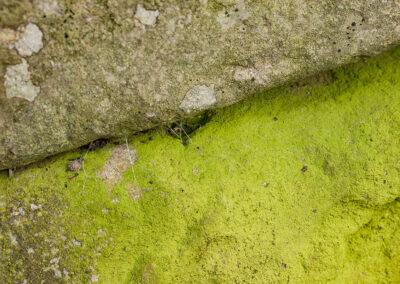 Various crustose lichens on rock in Glandernol garden wall