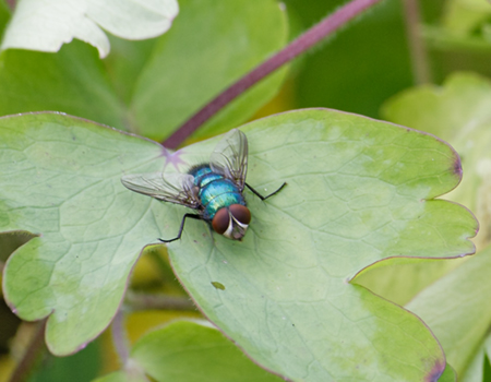 link to Flies page