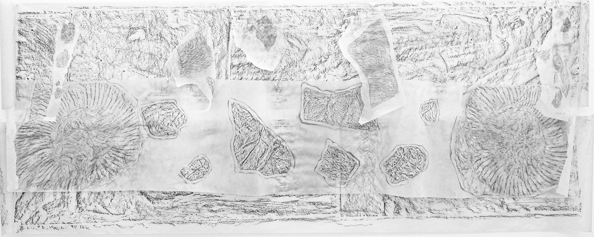 'Millenia', rubbings of fossils by artist Sue Purcell