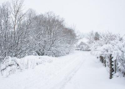 Looking north-west along Dernol lane from outside Glandernol, December 2017