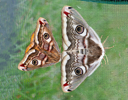 link to Moths & Butterflies page