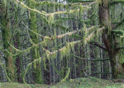 Mosses on tree branches