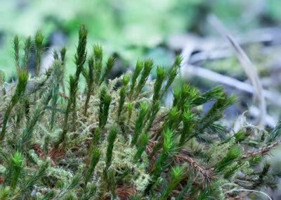 Mosses on wood