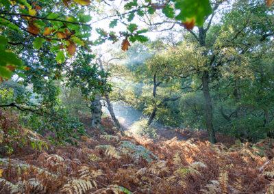 in Cnwch Wood