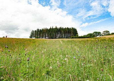 Penglaneinon Meadow, a Radnorshire Wildlife Trust reserve