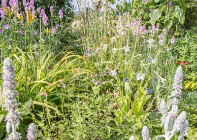Glandernol garden, July
