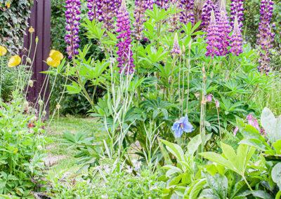 Glandernol rear garden
