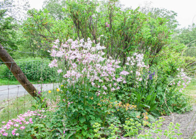 Glandernol garden